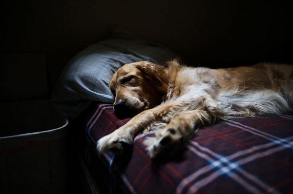 睡眠時間が長い県と短い県